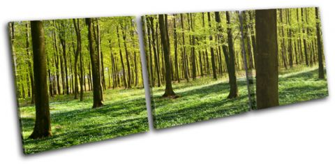 Forest Landscapes - 13-0878(00B)-TR31-LO